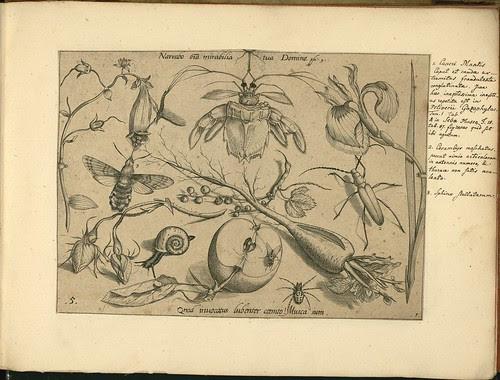 Archetypa studiaque patris - Joris Hoefnagel (1592) g