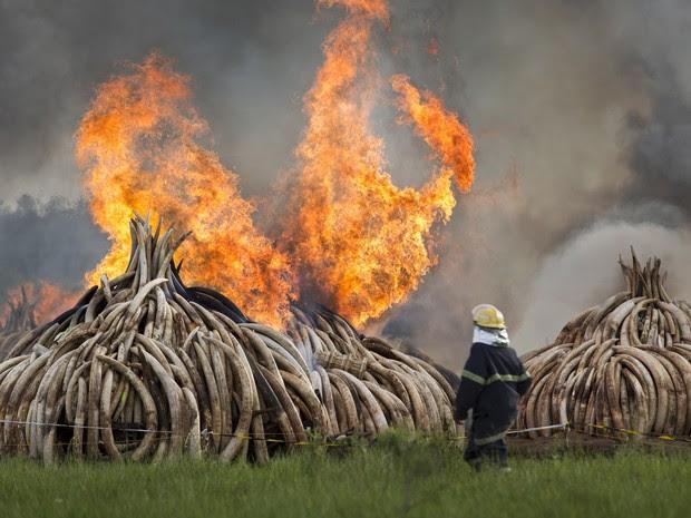 Quênia queima toneladas de marfim  (Foto: AP)