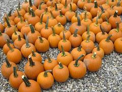 An October Farm Day! 10