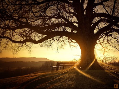 Sun-rise-behind-a-tree_large