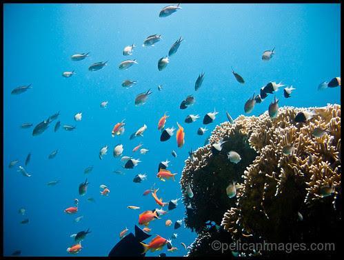 Fishy Fauna