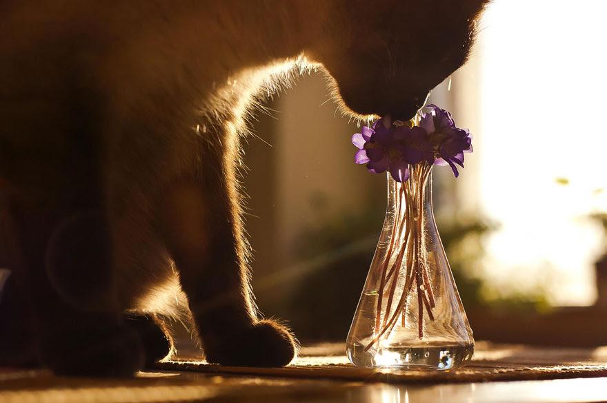 Gato Flores de cheiro