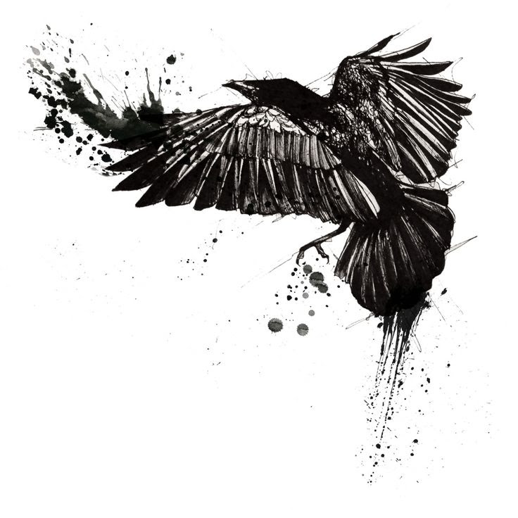 The Best Free Raven Watercolor Images Download From 50 Free