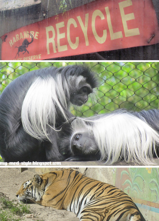 Animal Kingdom 8