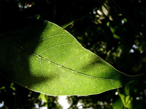hojas-arbol-02