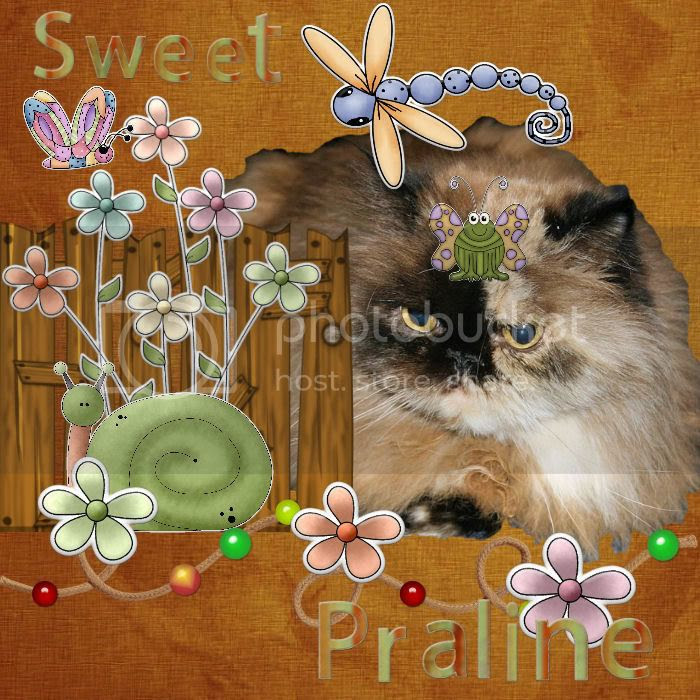 Persian Cat,Country Cats