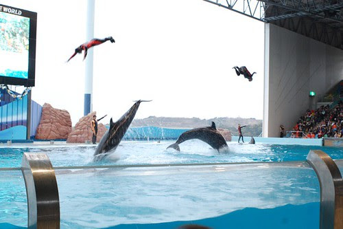 In a zoo, dolphines