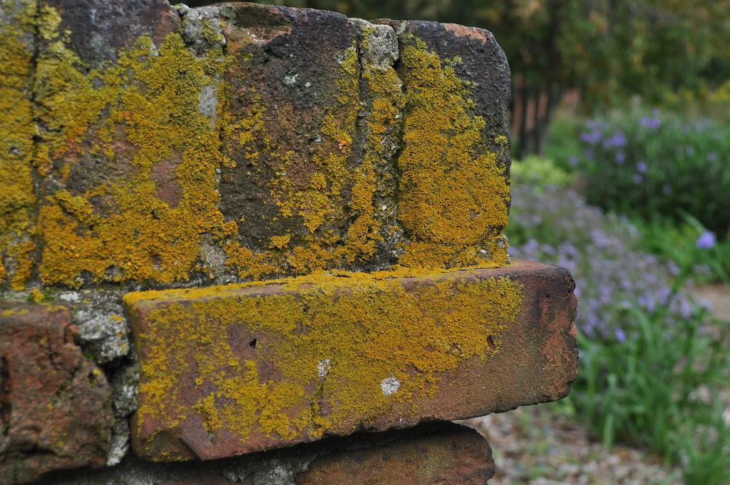Lichens 1