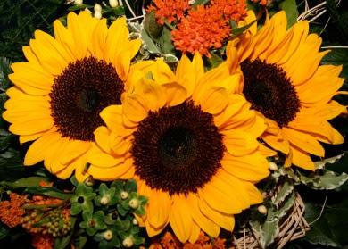 http://www.loveandmarriage.de/wp/wp-content/uploads/2010/04/blumenstrauss-390x279.jpg