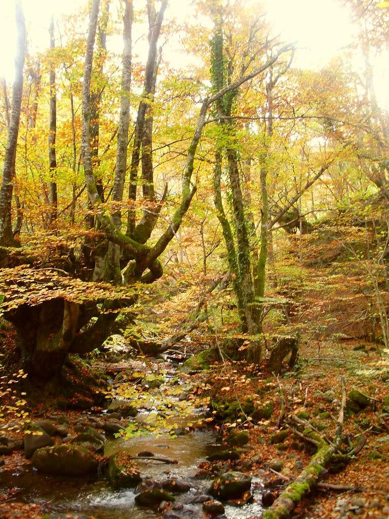 Bosque de Lindes 033