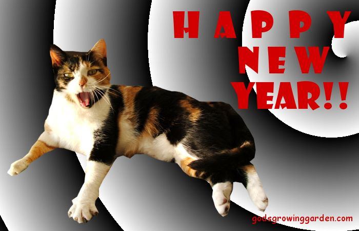 Happy New Year, by Angie Ouellette-Tower for godsgrowinggarden.com