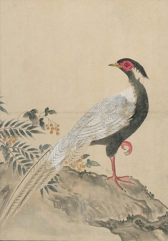 Ink + Watercolour  Bird sketch q