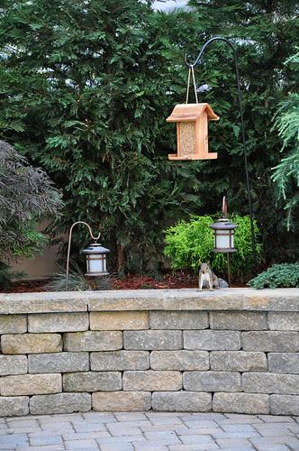 SquirrelsFoundit