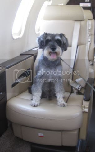 Viajar en avion con un perro