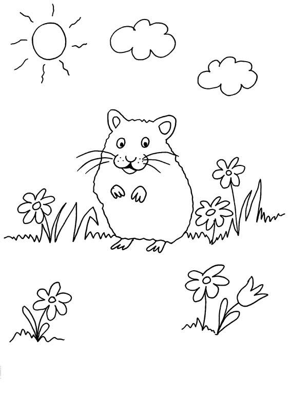 ausmalbilder malvorlagen und ausmalbilder zum thema meerschweinchen ...