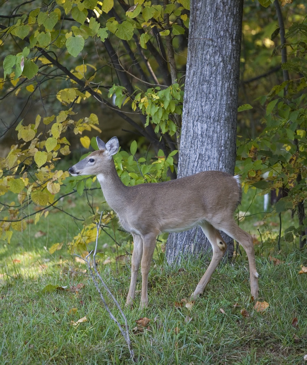 Seasonal And Deer Resistant Landscaping Tips Tompkins County Ny