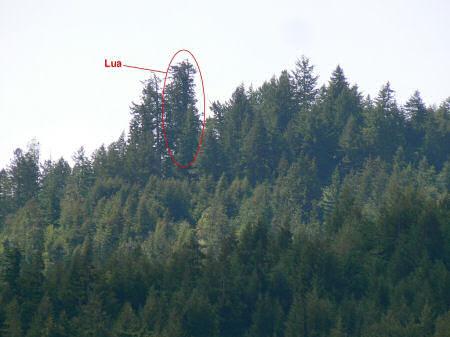 Julia Butterfly Hill, a mulher que ficou dois anos em cima de uma árvore para evitar seu corte