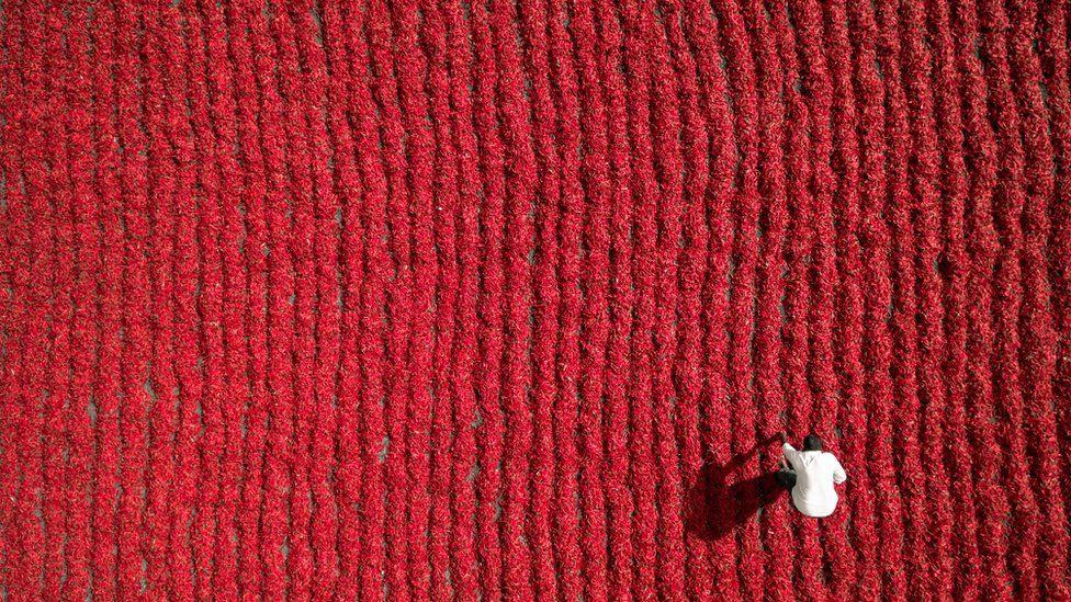 Fazendeiro trabalha em plantação de pimentas malaguetas