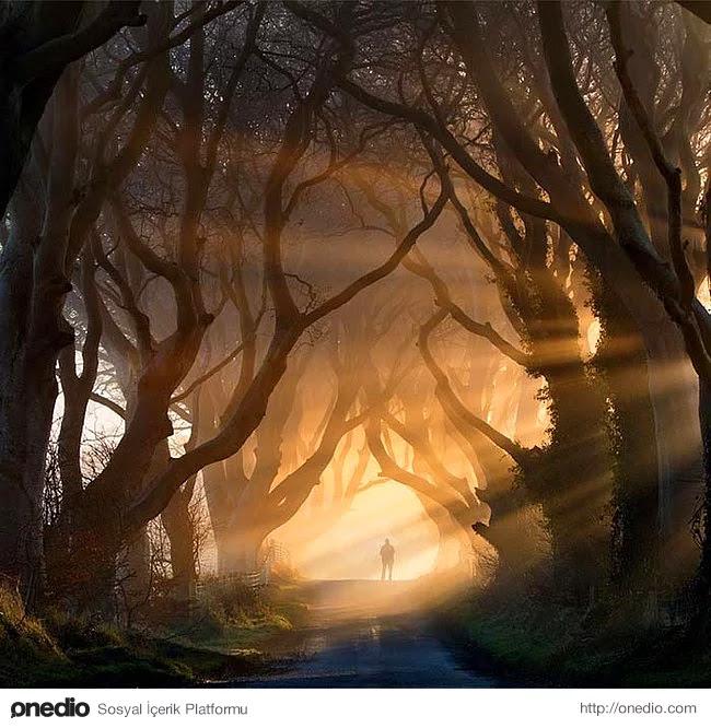 21. Dark Hedges, İrlanda'da bulunan tarihi kayın ağaçları