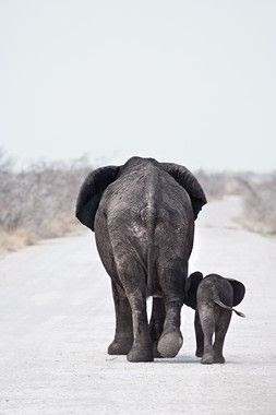 Elephant mama and baby.