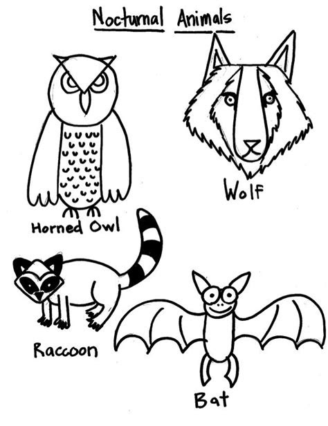 nocturnal animal coloring pages nocturnal animals