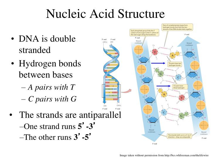 PPT - Protein Synthesis PowerPoint Presentation - ID:3057728