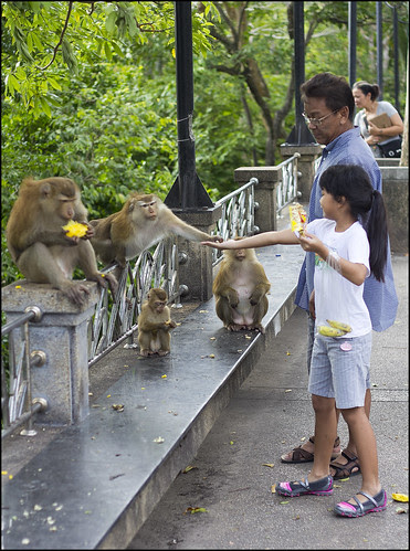 Feeding the Monkeys