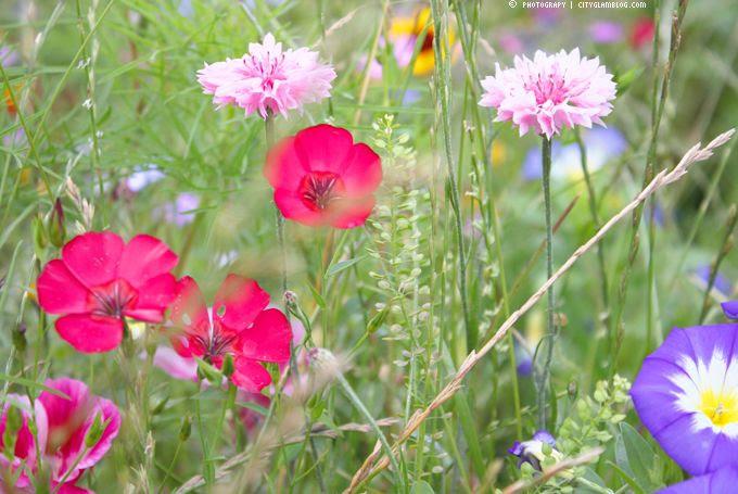 http://i402.photobucket.com/albums/pp103/Sushiina/cityglam/fff7.jpg