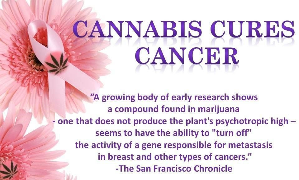 Image result for cannabis cures cancer