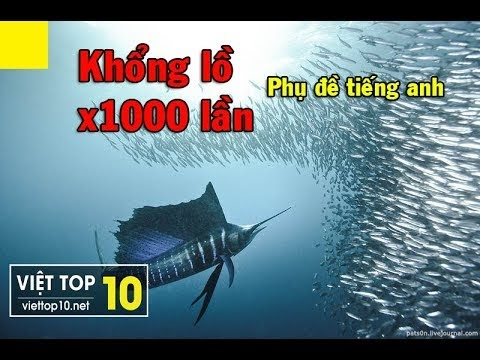 Ocean Giants - Top 10 Of The Largest Sea Animals In The World - English Chanel of Việt Top 10