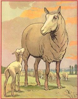 buff mouton