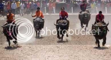 Chonburi, Thailand Bull Jockeys