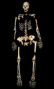 Scientists managed to analyse DNA found in the thigh bone of this skeleton found in Spain