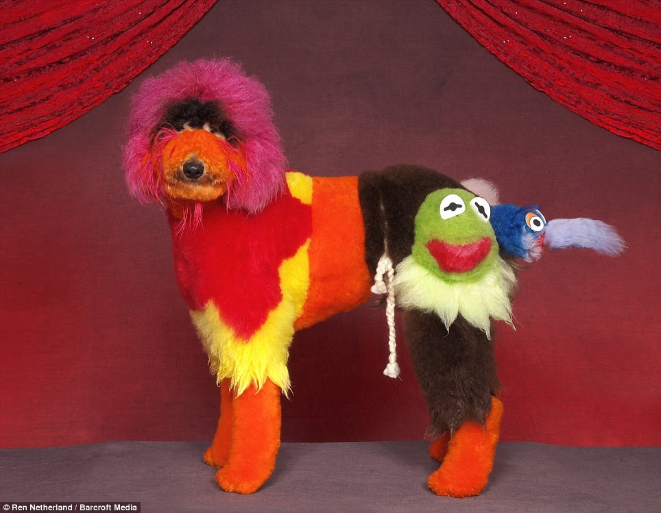 Stunning: This airdale terrier has been transformed into characters from the popular children's TV show The Muppets