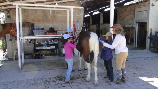 ¿Qué es la alergia a los caballos y cómo tratarla?
