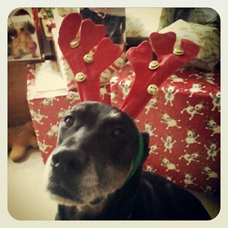 Lola's in the Christmas spirit!