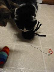 Fuzzy spider and catnip sock
