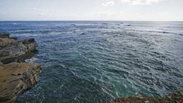 Corrientes oceánicas y fauna marina