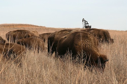 Bison/Oil Well