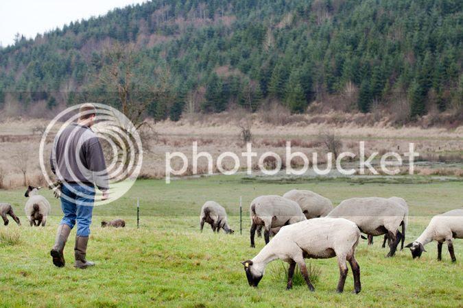 photo 0071_lamb_zps8661b6ff.jpg