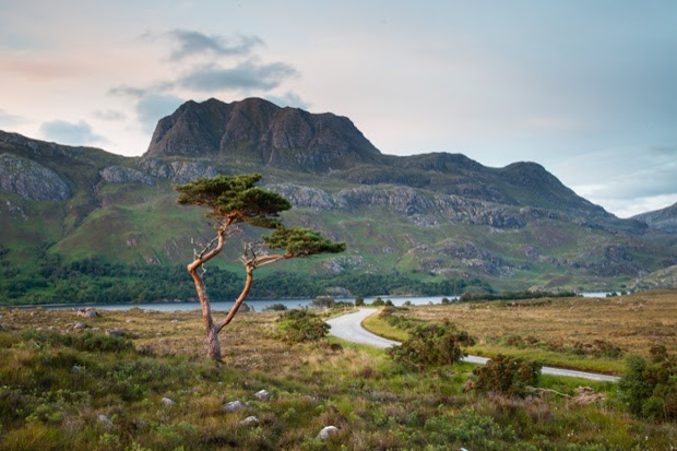 A pine tree standing in front of Loch Maree and Slioch.