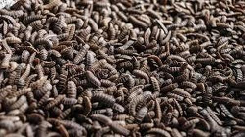 La granja de insectos más grande del mundo se construirá en Illinois en medio de signos de inflación de alimentos en aumento