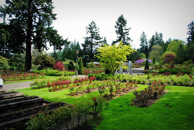 International Rose Test Garden - Washington Park - Portland, Oregon