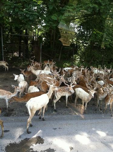 Safari World, Bangkok Thailand