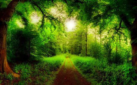 natural forest road trees green forest grass green hd wallpaper wallpaperscom