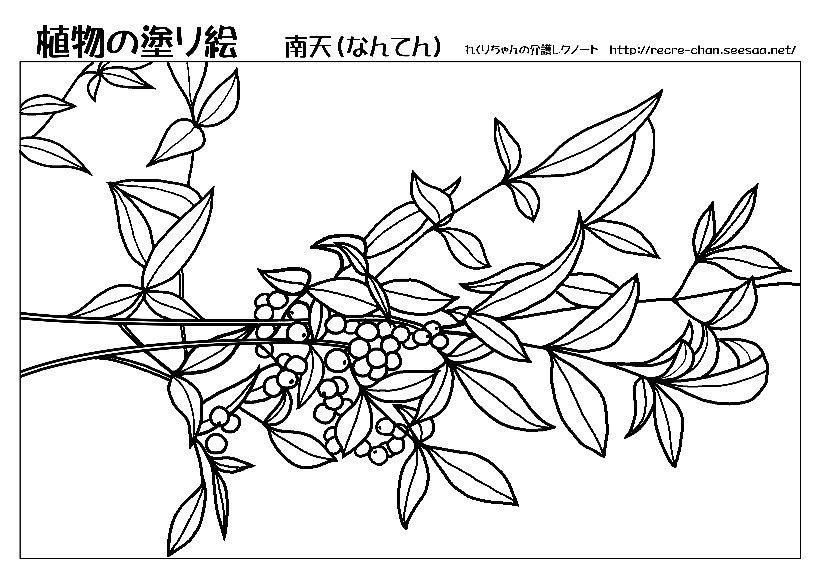 植物の塗り絵 無料配信 南天 れくりちゃんの介護レクノートtitle