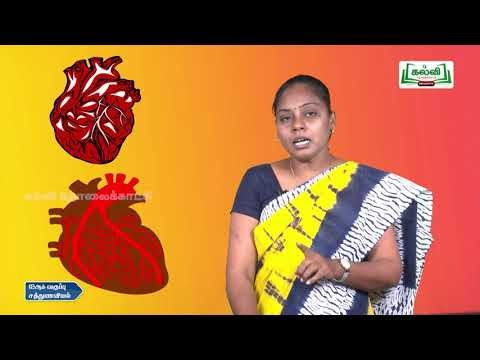 12th  Nutrition இதய சுற்றோட்ட மண்டலம்,நோய்களும் திட்ட உணவு மேலான்மை பகுதி 2  Kalvi TV