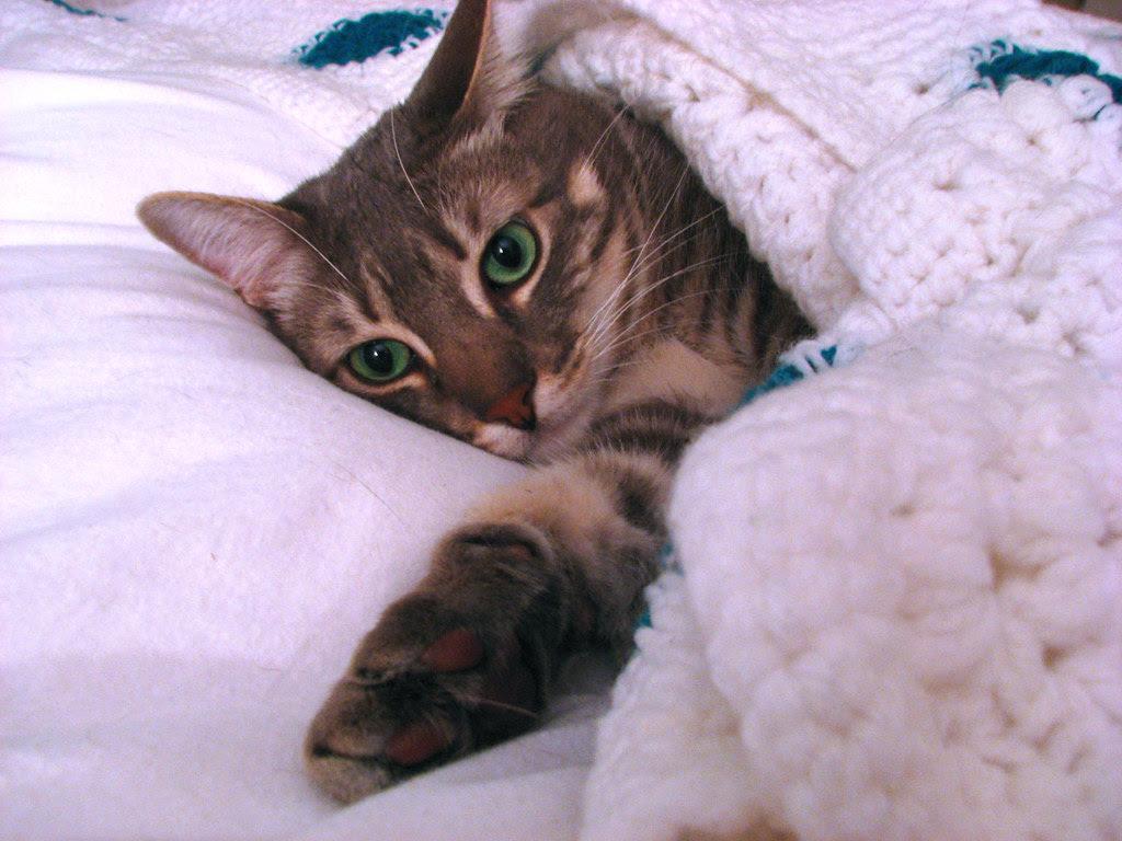 crochet blanket white turquoise 4