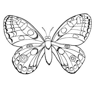 coloring pages for girls - Printable Coloring Pages For Girls
