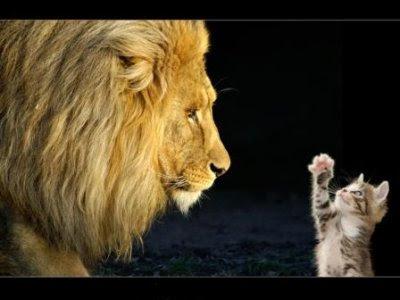 http://www.redsagainsthemachine.gr/sites/default/files/imagecache/article_photo/article_photos/lion-cat.jpg